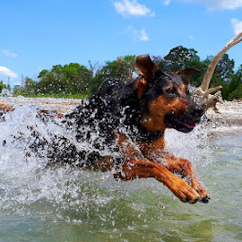 into the waves by Anthony Carlo - Animals - Dogs Running (  )