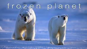Frozen Planet thumbnail