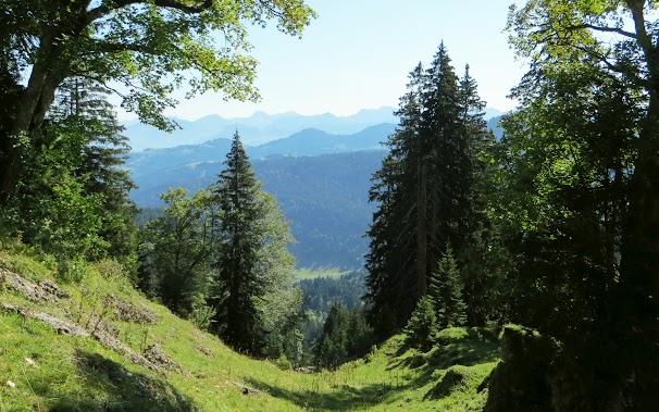 Scheidwangalpe Rindalphorn Aufstieg über Almwiesen