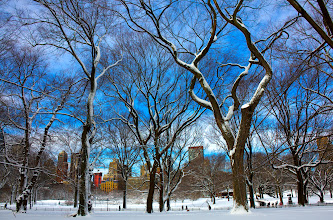 Photo: Central Park Trees  Early morning Central Park after the snow storm. Would love another snow storm this weekend, but I'll settle for this wonderfully warm weather we are having right now.  #nyc  #centralpark  #snow  #newyork