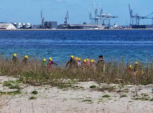 Photo: Gule kasketter ved Ballehage Strand, Aarhus
