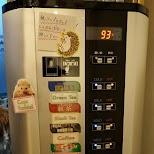 get coffee, tea or water at hedgehog cafe HARRY in Tokyo in Tokyo, Tokyo, Japan