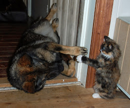 Photo: Catfight!