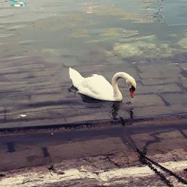 swam by Ashlen Vas - Animals Other