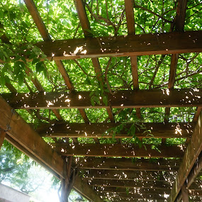 Garden walkway by Ashley Ellis - Abstract Patterns ( angles, vanishing point, green vines, under, perspective )