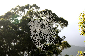Photo: Year 2 Day 231 - Giant Cobweb