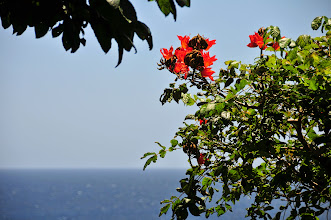 Photo: Vegetation and the sea.