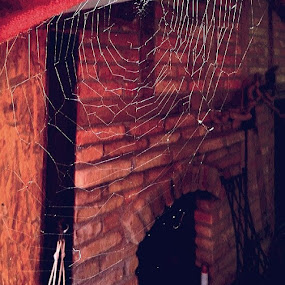 Web in front of garden house by Nat Bolfan-Stosic - Nature Up Close Webs ( red, summer, house, garden, spider web )