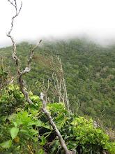Photo: Planten moeten echt vechten voor hun leven op zo'n open en bloot liggende rots