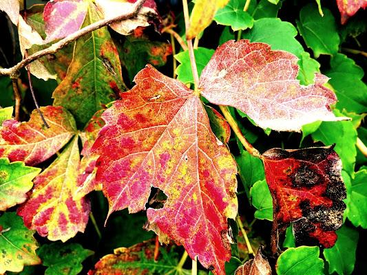 I Colori Dell'autunno di Templar