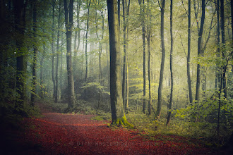 Photo: #forest   #narure   #landscape   #textureblendphotography  Have a nice weekend! http://wuestenhagen-imagery.photoshelter.com/