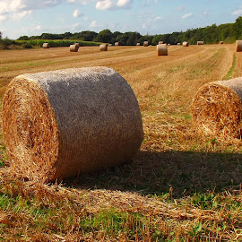 Hay geometry by Ciprian Apetrei - Landscapes Prairies, Meadows & Fields ( hay, summer, brittany, landscape, prairie )