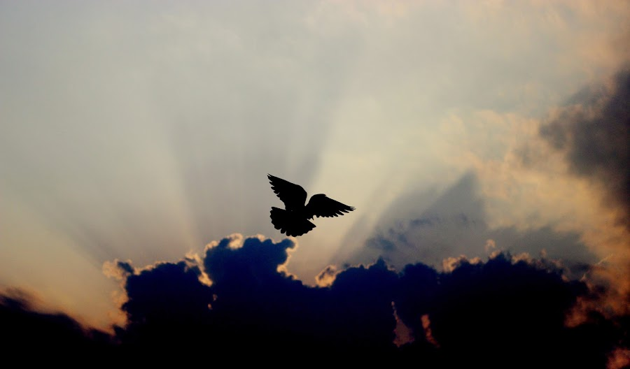 Born free by Soumyodeep Mukherjee - Landscapes Cloud Formations