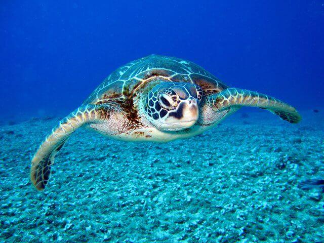 Turtle spotting in Gili Meno Island