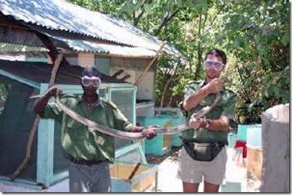 World's Largest Spitting Cobra Species found in Kenyan Bio-ken farm