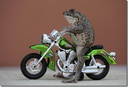 Oui, a Frog Moto Rider