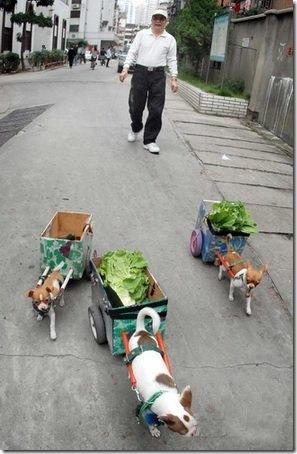 lettuce dogs 2