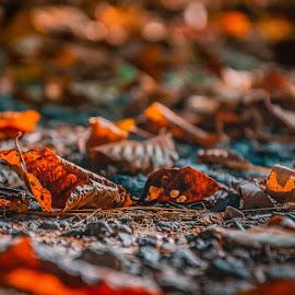 Leaves. by Darijan Mihajlovic - Nature Up Close Leaves & Grasses