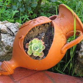 by Gigi Furtuna - Nature Up Close Gardens & Produce