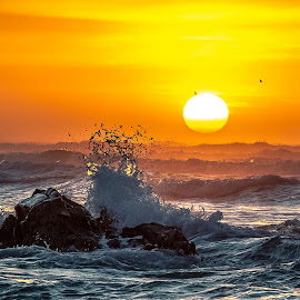 Summer waves by Nicole Rix - Landscapes Waterscapes ( waves, rock, sunrise, seascape, waterscape, birds, water, sun, summer,  )