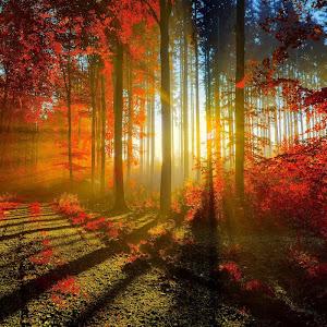 autumn_red_forest-wide.jpg