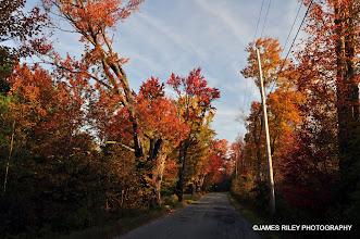 Photo: Happy Avenue in Autumn 003