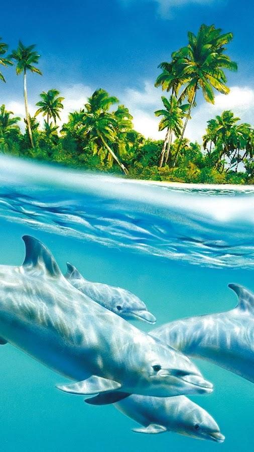 Tropicale fond d 39 ecran anim applications android sur google play - Jeux gratuit de dofin ...