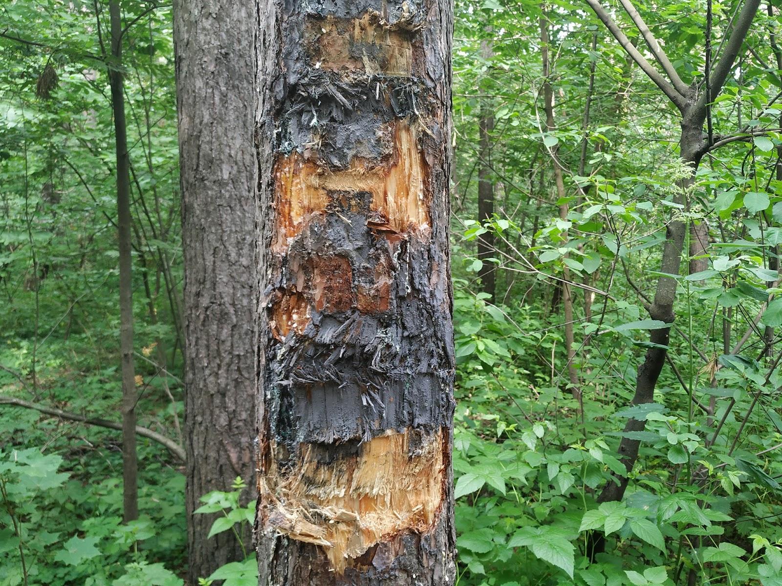 Возможно, это изображение (дерево и природа)