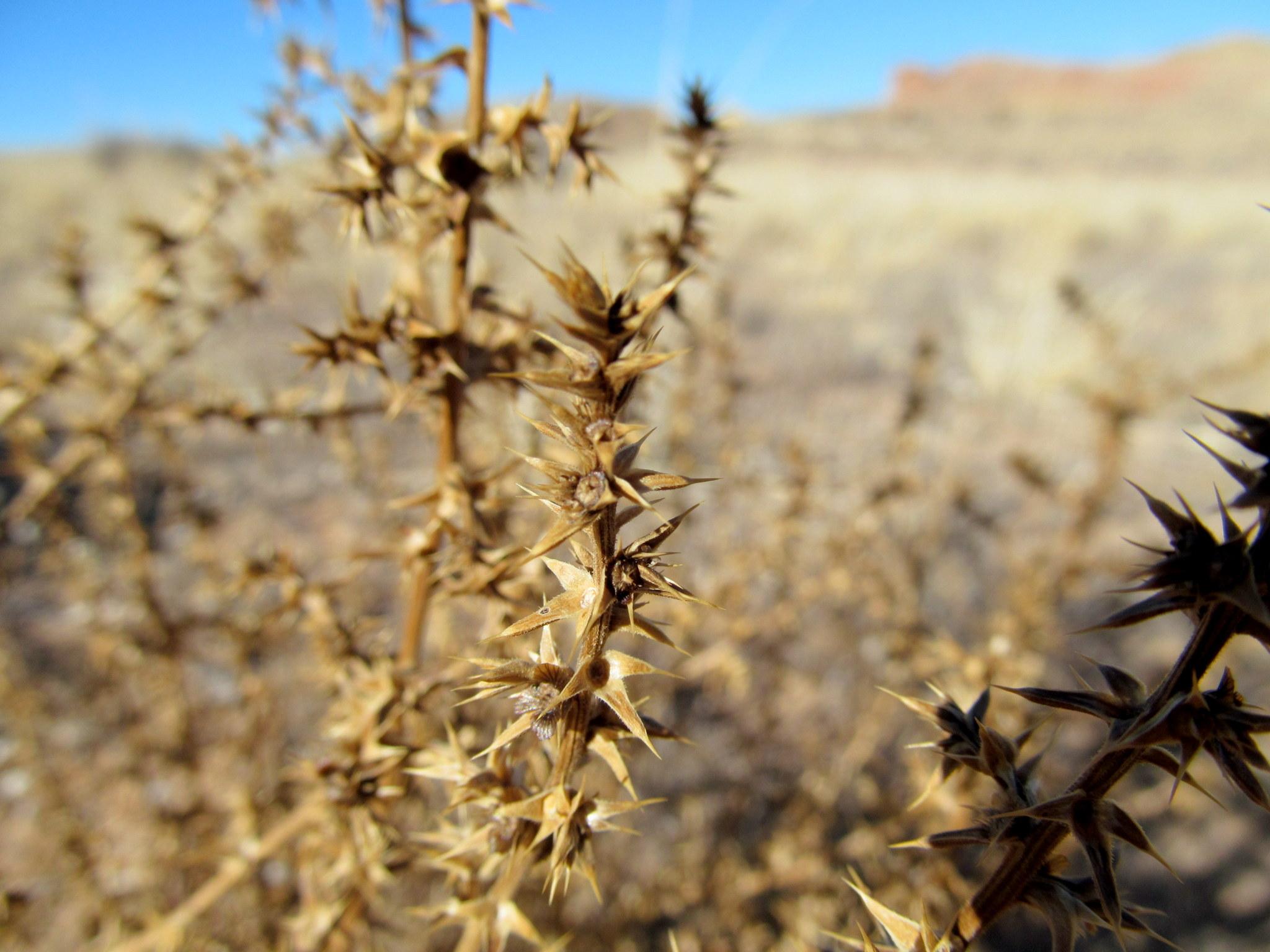 Photo: Stickery weeds