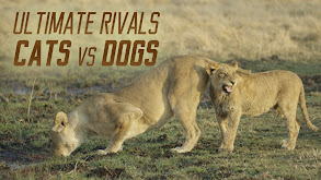 Ultimate Rivals: Cats vs Dogs thumbnail