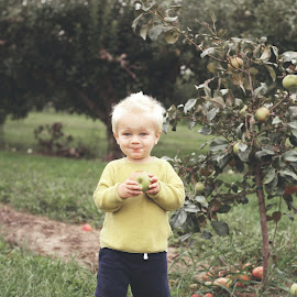 Picking Apple by Jay Reich - Babies & Children Children Candids ( apple, contest, no market, rights, child,  )