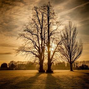 December Chestnut Sunrise by Phil Clarkstone - Nature Up Close Trees & Bushes ( chestnut, eltham, winter, hoar, cold, london, leafless, frost, sunray, sunrise, golden, shadows )