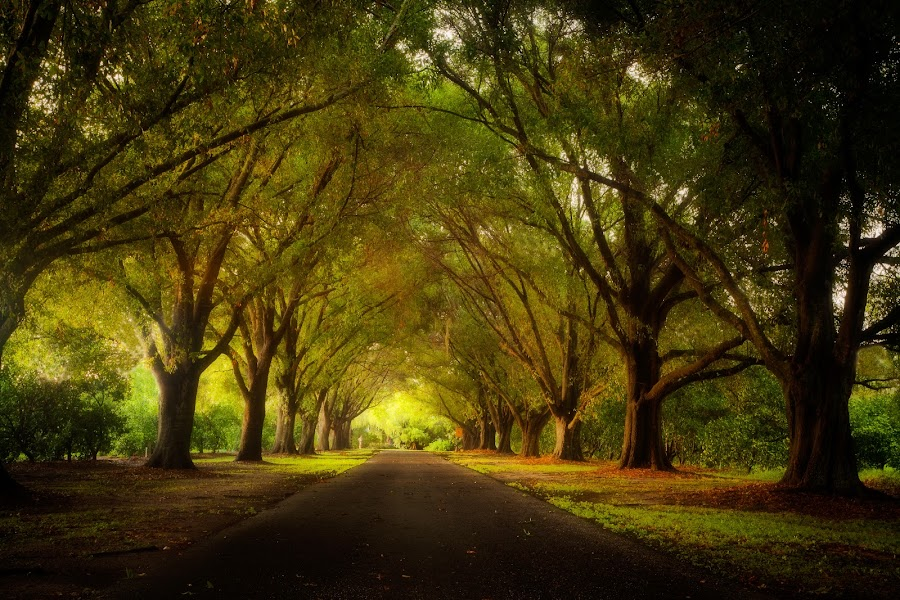 Enchanting travels by Andy Glogower - Landscapes Travel ( pwcpaths )