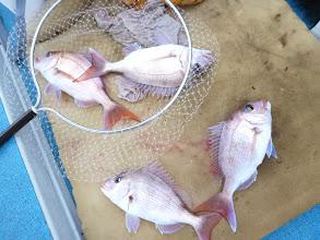 Photo: アダチさんとタムラさんは真鯛のダブルの共演!
