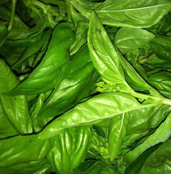 Fresh from the garden... Basil