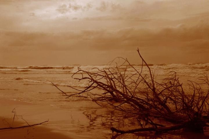 Branch at sea di kappa69