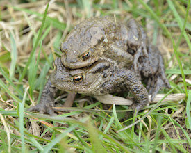 Photo: Toads