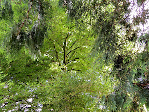 Photo: the green predominance for #treetuesday by +Christina Lawrieand +Shannon S. Myers