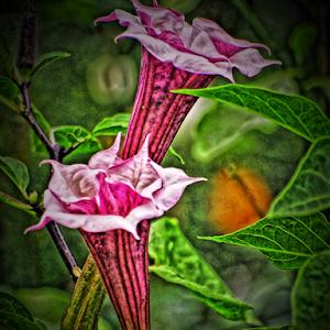 Datura digital.jpg