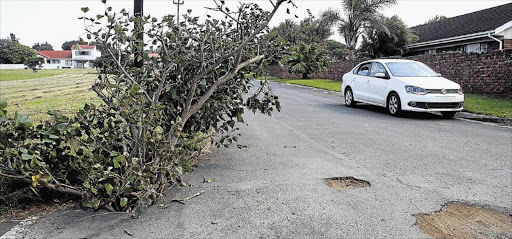 A Pothole So That Residents Plant Tree In It