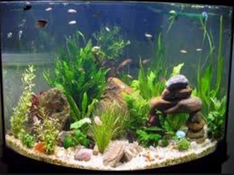 現代の水族館のアイデア