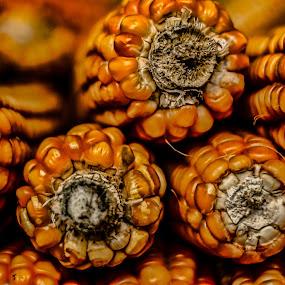Corn by Roberto Sorin - Nature Up Close Gardens & Produce ( orange, nature, garden, close up, closeup, corn,  )