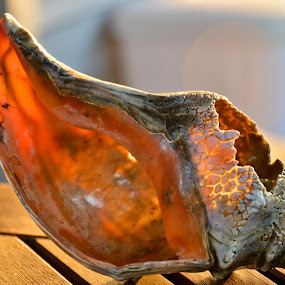 Hurricane Sandy's Conch by Bill Frank - Artistic Objects Other Objects