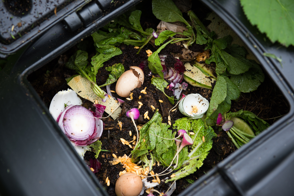 Composteira com casca de ovo, cebola, restos de alimento