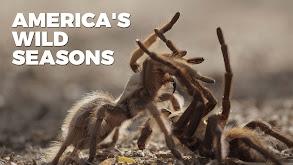 America's Wild Seasons thumbnail