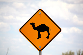 Photo: Year 2 Day 218 -  Beware of Camels