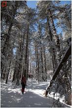 Photo: Вече нагоре през гората край Зелени преслап