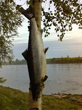 Photo: Tornionjoki