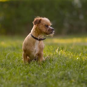 dog by Robin Alin - Animals - Dogs Portraits ( dog park, dog portrait,  )
