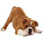 Dog Breeds Profile 4.0